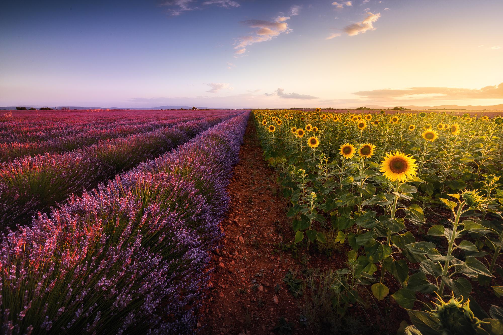 Valensole, France